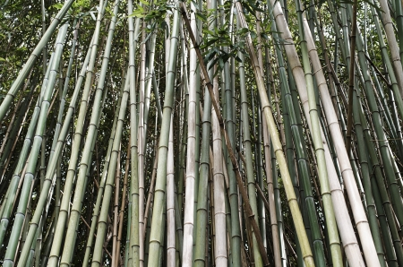 plant of bamboo in a garden of my friend Stok Fotoğraf