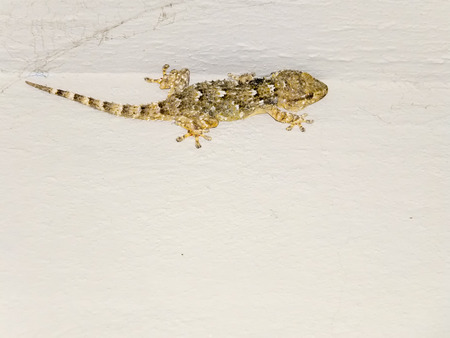 geckos on the cement wall. photo