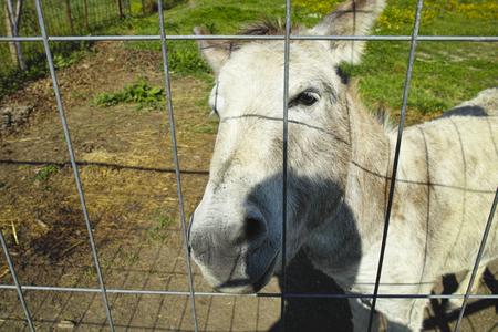 two donkey in a meadow in la spezia photo