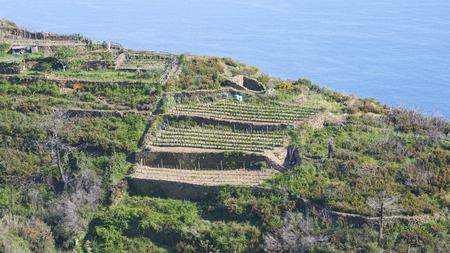 aereal: scenery of ligurian coast line in summer time