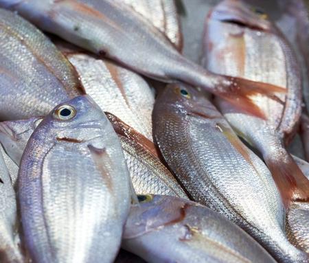 sea bream pagrus fish at the local market