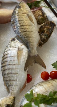Striped sea bream (Lithognathus mormyrus). Photo taken at the main fish market (a street market) in Genova, Ligurian, Italy.
