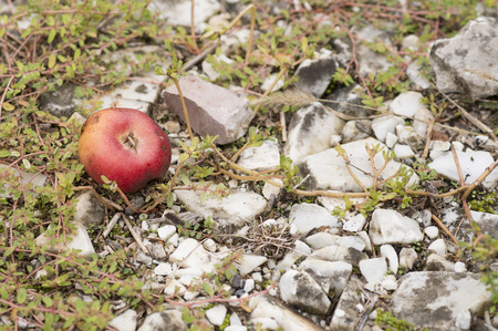 bunched: detail of wild apple in a meadow in la spezia
