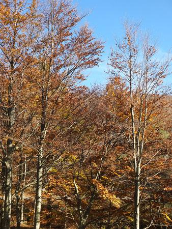 appennino: photo of autumn foliage and tree in italian appennino