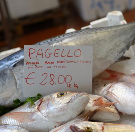 thunnus: detail of tuna fish in genova fish market