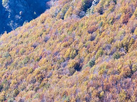appennino: Autumn foliage and tree in italian appennino