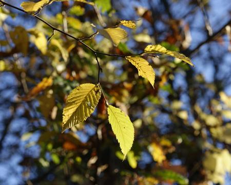 appennino: Autumn foliage and tree