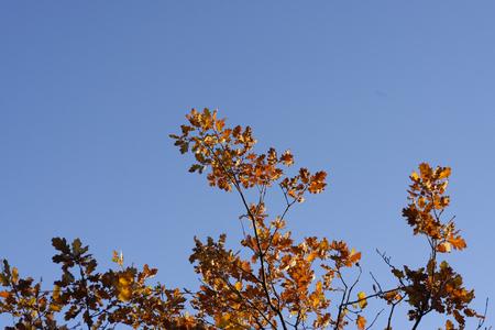 appennino: Autumn foliage and tree  Stock Photo