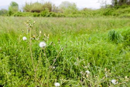 sarzana: Natural scenery with wild plants at Bozzi Saudini