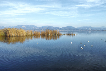 lago: Lake scenery of Torre Del Lago Stock Photo