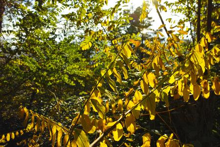 appennino: Autumn foliage and tree at Appennino