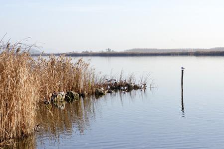 viareggio: Lake of Torre Del Lago near Viareggio
