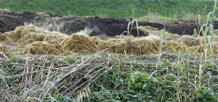 bullshit: detail of manure in a meadow in la spezia Stock Photo