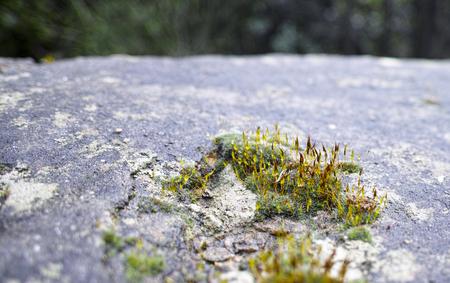 spezia: detail of a moss on top a rock in la spezia Stock Photo
