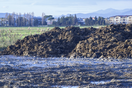 detail of manure in a meadow in la spezia Stock Photo