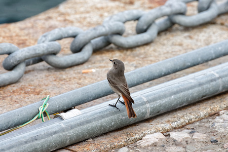 songster: detail of red start in the street Stock Photo