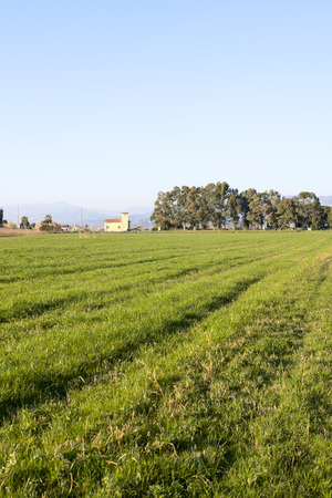 panoramic view of the meadow in luni near sarzana Stock Photo