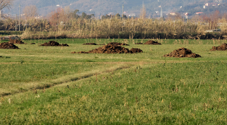 detail of manure in a meadow in la spezia Stock Photo