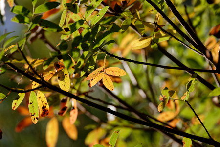photo of autumn foliage and tree in italian appennino