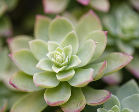 detail of succulent plant in a meadow