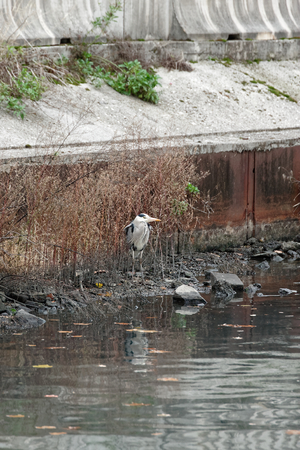 photo of beautiful heron in a channel