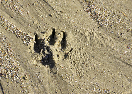 detail of path's animal in the sand 스톡 콘텐츠