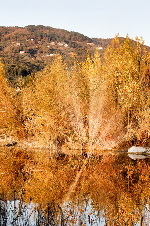 photo of autumn foliage and tree in italian appennino