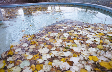 detail of autumn foliage on top water in a fountain in italy