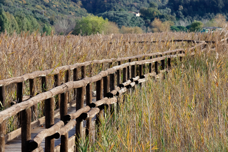 Nature Reserve, Oasis Lipu Massaciuccoli, Lucca, Tuscany - Italy Stock Photo