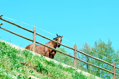 detail of a horse in a farm Stock Photo