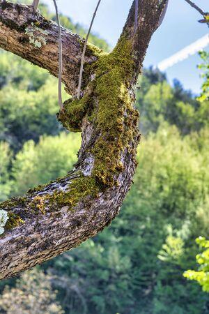 moss on tree in a meadow in la spezia