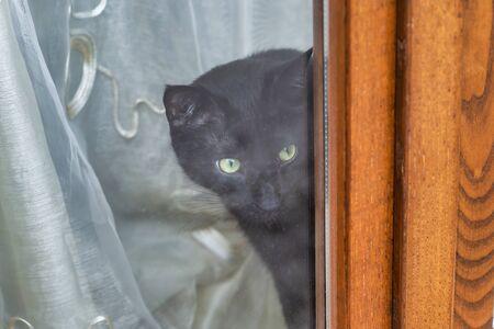 very nice curiosity cat behind a window house