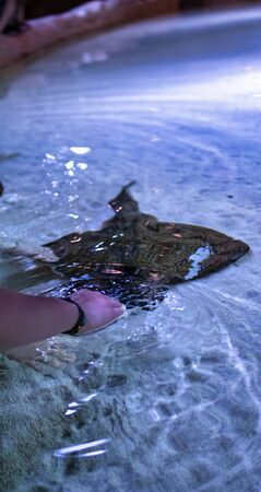 woman touch a ray in a big open aquarium