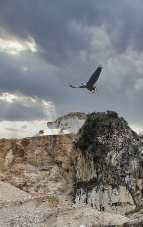 a eagle fly against marble quarry ii carrara , italy