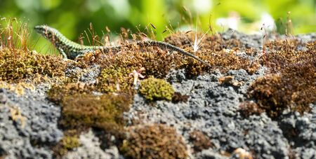 macro shot of moss on top a rock