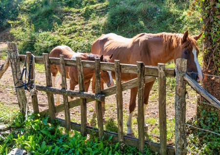 two brown horses in a meadow