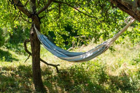 hammock beetween two tree in a garden