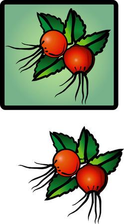 Dogrose. Drawing