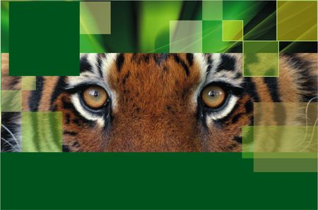 Tiger Stock Photo - 5678632
