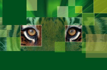 Tiger Stock Photo - 5678630