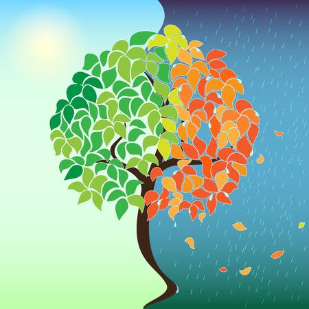 Summer - Autumn