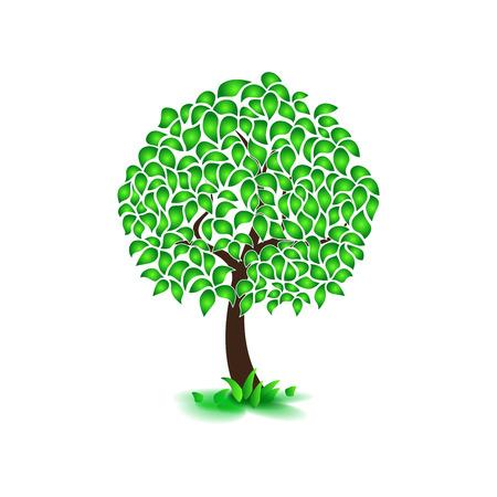 fertile: Isolated on white background summer tree, dense foliage, flat style. Vector image