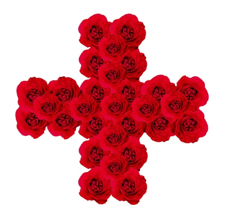 cross rose photo