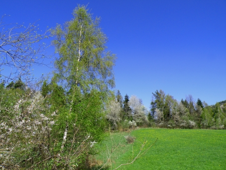 spring landscape                   photo