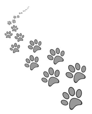 huellas pies: Lindo perro o gato impresi�n de la pata, sobre fondo blanco Vectores