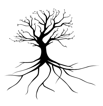trees silhouette: Whole black tree with roots isolated white background vector Illustration