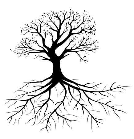 arbres silhouette: Whole arbre noir avec des racines isolé fond blanc