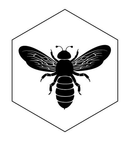 honey cell: Bee on honey cell