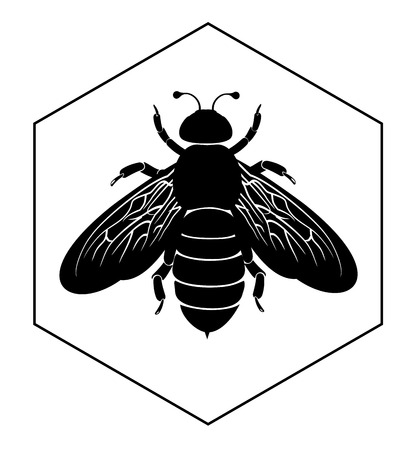 abeja: Abeja en las células de la miel