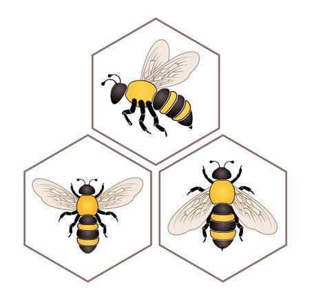 honey cell: Bee on honey cell set isolated on white background vector Illustration
